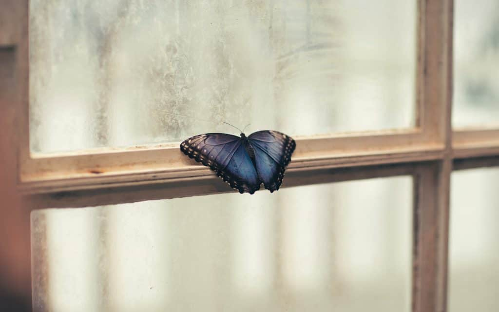 Butterfly on window to signify feeling trapped