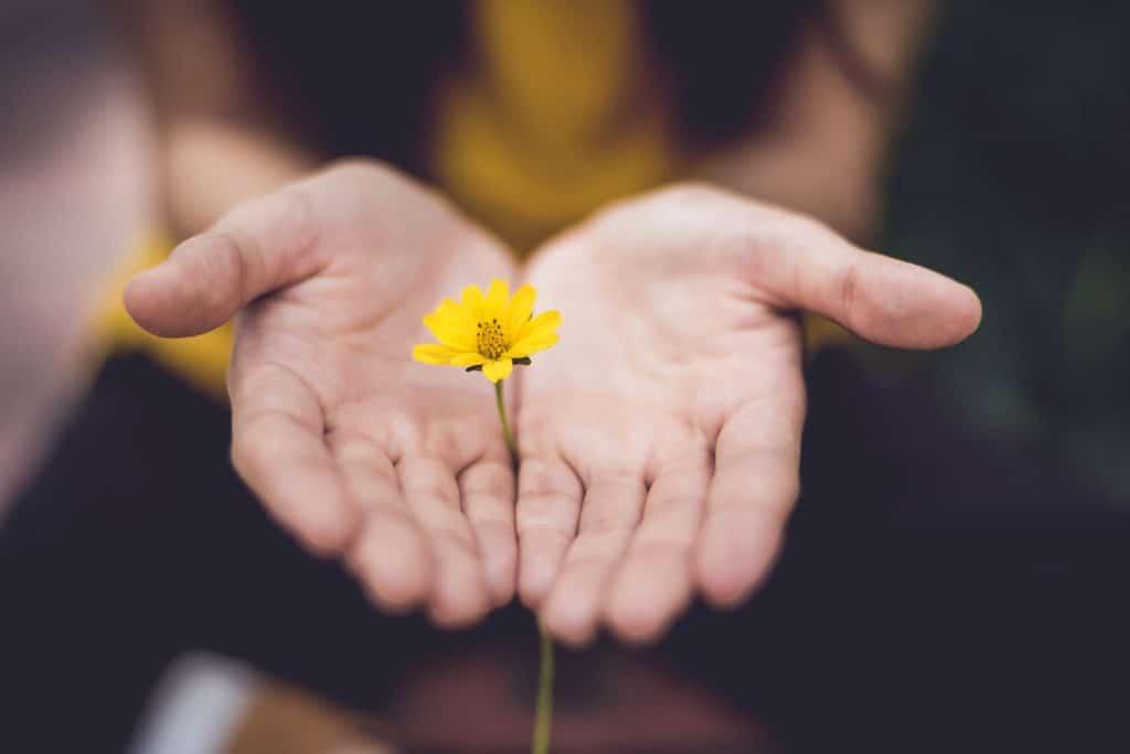 Yellow flower held between two hands